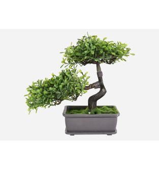 Matera-Bonsai-Doble-Negro