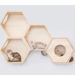 Gimnasio-para-gatos-Castelli-1